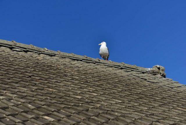 上ってはいけない屋根