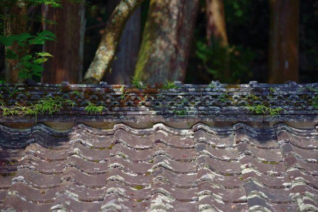 屋根瓦 海苔